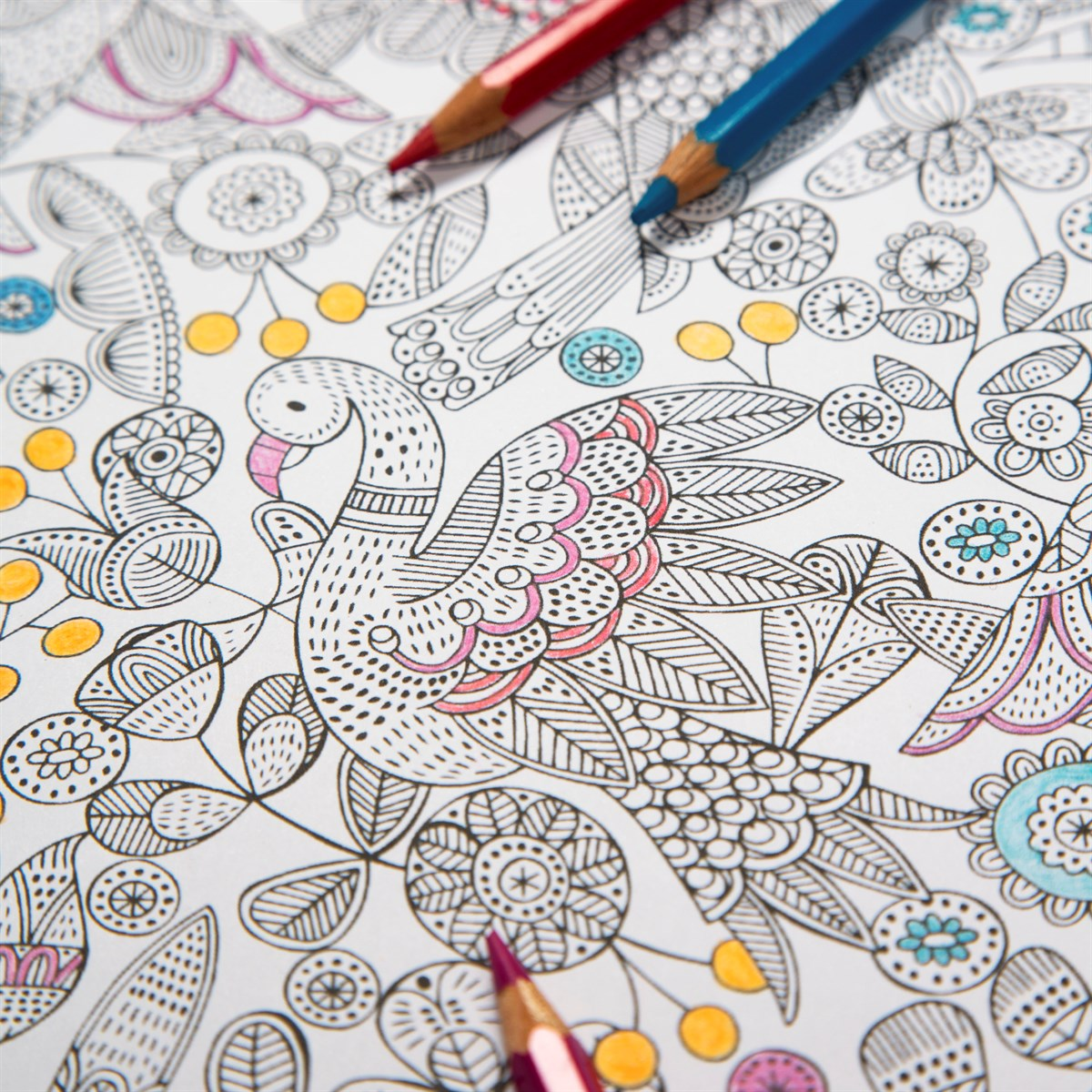 Bird colouring in wrapping paper online, different and quirky wrapping paper designs, shops in bude, gift shops in bude