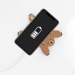 wireless phone chargers - funky animals bears - shops in bude